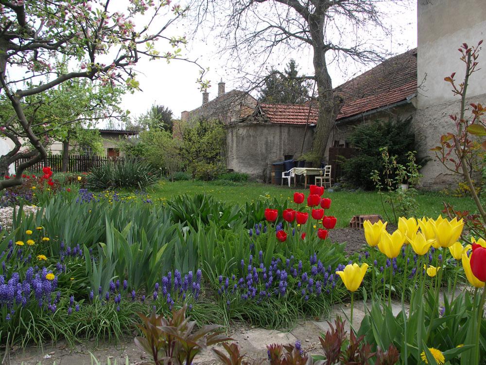 Rastliny, ktoré kvitnú skoro na jar, sa môžu pod listnatými stromami uplatniť neobmedzene – využívajú totiž obdobie, keď stromy ešte nemajú listy, takže knim prepustia dostatok svetla. Cibuľoviny sú výbornými pomocníkmi pri oživení takmer každej časti záhrady.