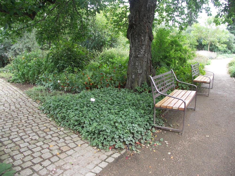 Ideálnou rastlinou pod stromy je hluchavka žltá (vpredu) alebo podobná, oniečo menej rozpínavá hluchavka škvrnitá. Obe bez problémov zvládajú isuchý tieň, sú preto vhodné ako podrast všade tam, kde nevieme zabezpečiť pravidelnú zálievku – napríklad pri chatách.