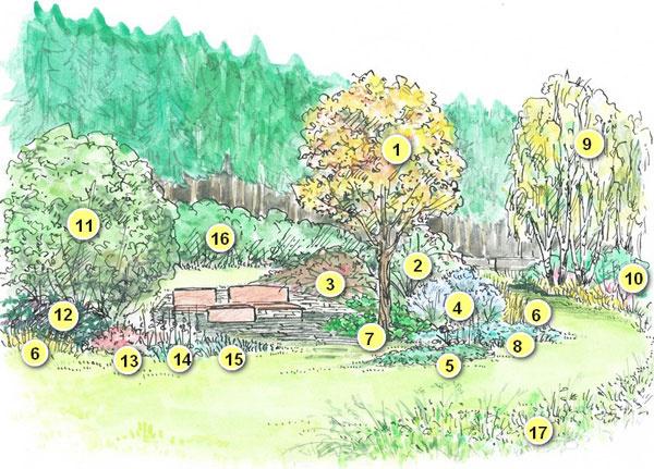 Návrh skupinovej výsadby pod stromami v  odľahlej časti prírodnej záhrady (v  jesennom sfarbení)  Výpis druhov: 1. Jarabina (Sorbus)  2. Kríková ruža – šípová alebo vráskavá  (Rosa canina alebo R. rugosa) 3. Skalník vodorovný (Cotoneaster horizontalis) 4. Bradavec klandonský (Caryopteris clandonensis) 5. Drieň (svíb) kanadský (Cornus canadensis) 6. Ostrica Buchananova (Carex buchananii) 7. Bergénia srdcolistá (Bergenia cordifolia) 8. Pakost himalájsky (Geranium himalayense) 9. Breza (Betula) 10. Drieň biely (Cornus alba 'Sibirica') 11. Lieska (Corylus) 12. Rodgerzia stopkolistá (Rodgersia podophylla) 13. Pakost krvavý (Geranium sanguineum) 14. Náprstník červený (Digitalis purpurea) 15. Ostrica japonská (Carex morrowii 'Variegata') 16. Slivka trnková (Prunus spinosa)
