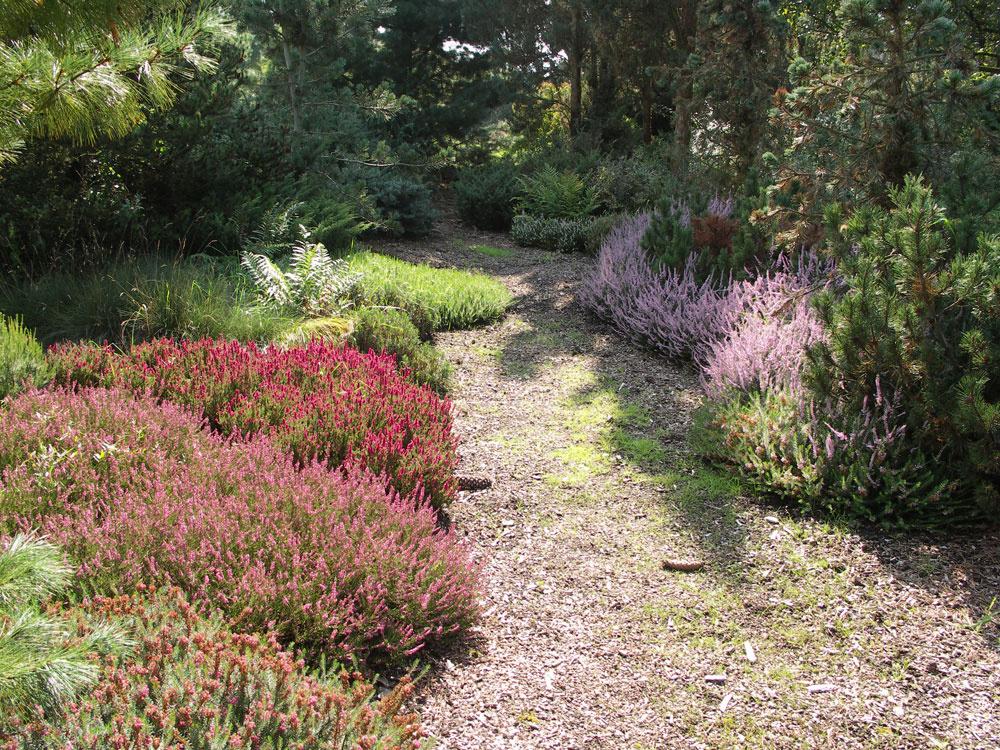 V  prírodne ladených záhradách sú vhodným podrastom borovíc vresy a  vresovce. Pri nich starosti so zálievkou odpadnú.