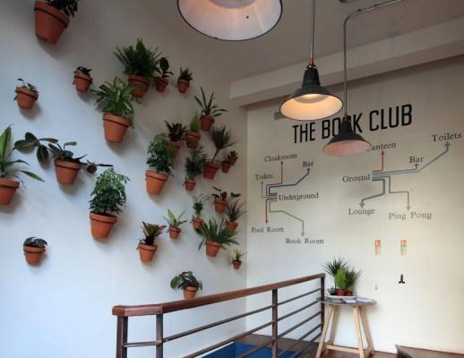 izbové rastliny na stene