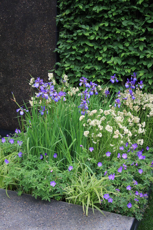 Vzáhrade vždy niečo kvitne azaujímavý je aj kontrast rôznych tvarov listov, ktoré sú vkompozícii zastúpené. Ani tu nechýbajú rôzne odtiene zelenej. (Na obr. modro kvitnúce pakosty akosatce sibírske, na bielo kvitnúca tráva chlpaňa nekvitnúca tráva ostrica.)