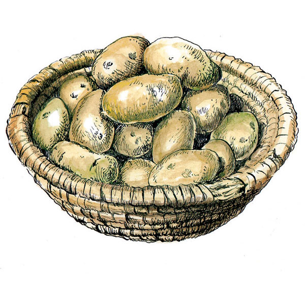 Skladujme a konzumujme iba zdravé zemiaky