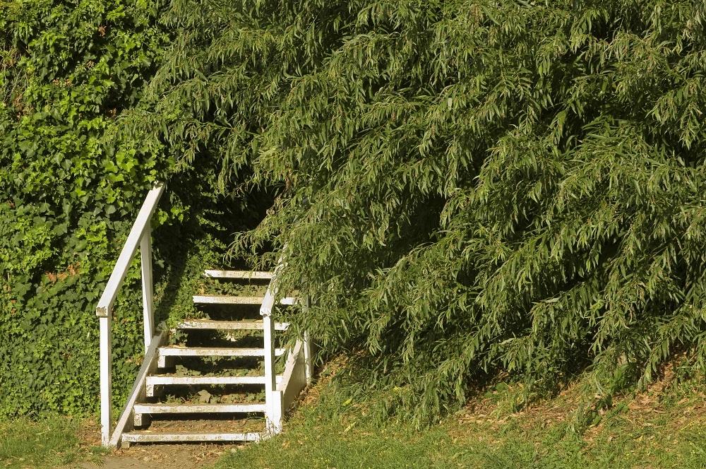 Humor záhradných architektov nepozná hraníc. Cesta do neznáma alebo tajomné zátišie? Či už zlyhal ľudský faktor, alebo zaúradovala príroda, nožnice naň neberte. Môže vám poslúžiť na oklamanie nepriateľa alebo ako vtipný záhradný doplnok.