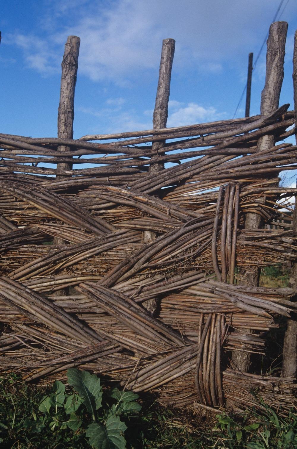 Prepletať, zapletať! Konárová asymetria má predsa len čosi do seba. Ľudskí kaderníci sa tentoraz riadne nadreli. Z vrkočov spanilej drevenej krásky vyrobili nevšedné oplotenie.