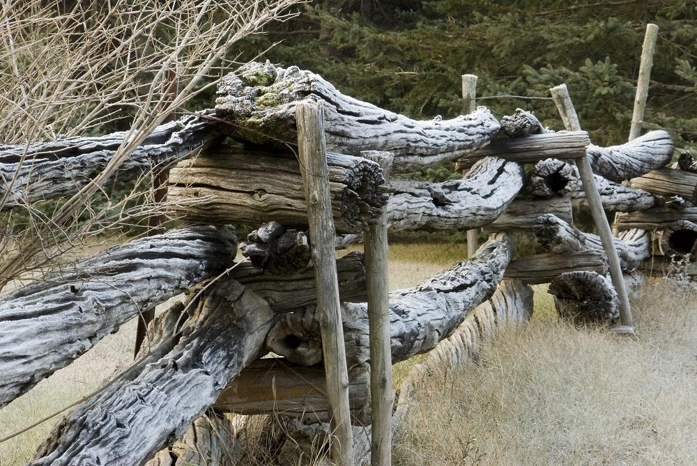 Tak ako popadali stromy. Touto myšlienkou sa dali inšpirovať stavitelia netradičnej ohrady. Využili to, čo mali poruke, a príliš si s tým hlavu nelámali. V jednoduchosti a v tomto prípade aj v sile je krása.