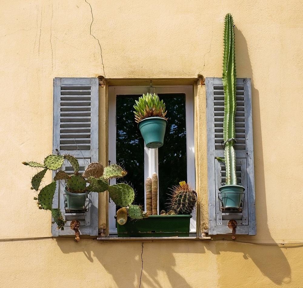 Púštny výhľad. Nakloniť sa z okna alebo prášiť periny by bolo riadne pichľavé. Ak ale bývate na prízemí a mreže vám rozhodne nerežú, kaktusy zlodejom dokážu poriadne skomplikovať ich nekalé úmysly.