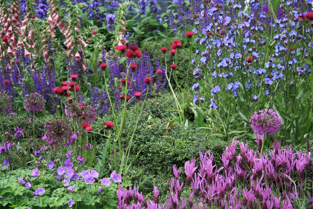 Viac farieb na jednom záhone – ideálne riešenie pre vidiecke záhrady. Netreba to však preháňať. Postačí štyri až päť odtieňov.