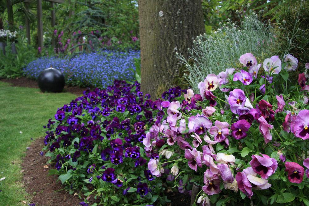 Keďže záhradu čiastočne zatieňujú statné listnáče, pri zakladaní trávnika padla voľba na špeciálnu zmes určenú do polotieňa. Ato bol základ neskoršieho úspechu.