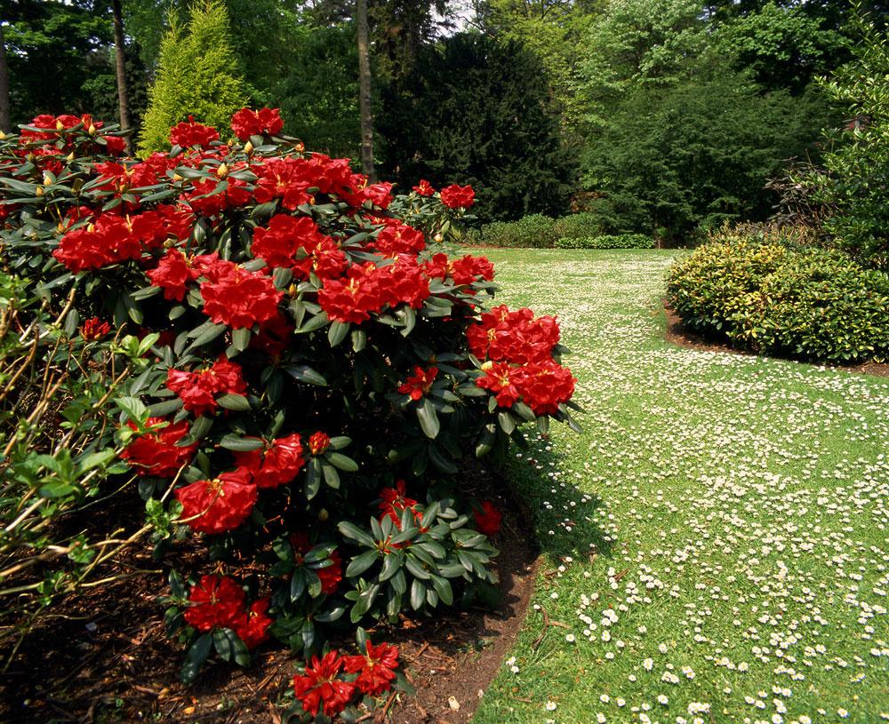 Moderné záhrady si žiadajú menej rastlinných druhov.