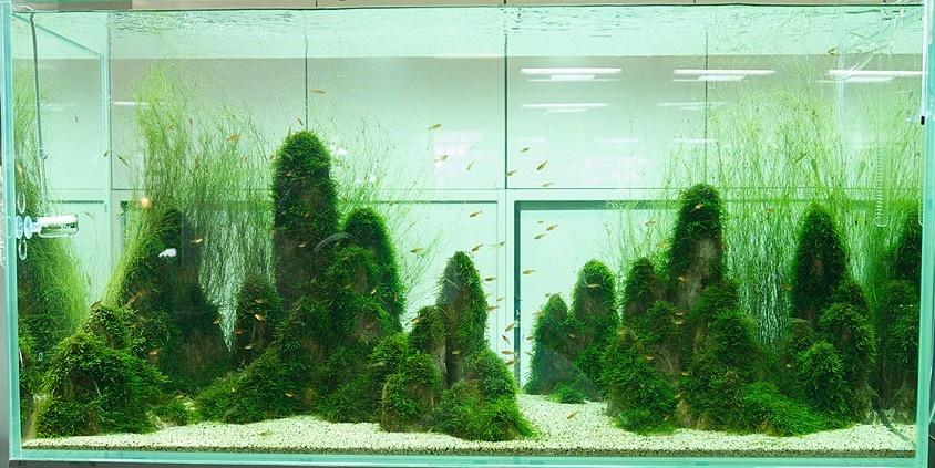 Japonec vyrába fascinujúce prírodné akvária