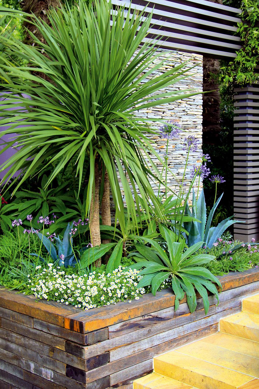 Odolné palmy ainé exoty Vhodnou kulisou kbazénu sú aj exteriérové palmy – dodajú mu stredomorský nádych. Skúste palmičku nízku (Chamaerops humilis) alebo trachykarp (Trachycarpus fortunei). Kvodnej ploche si môžete vysadiť aj veľkolisté kany (Canna indica). Rovnako exoticky pôsobia aj kordylínky (Cordyline australis 'Red Star'), juky alebogunery sveľkými dlaňovitými listami.