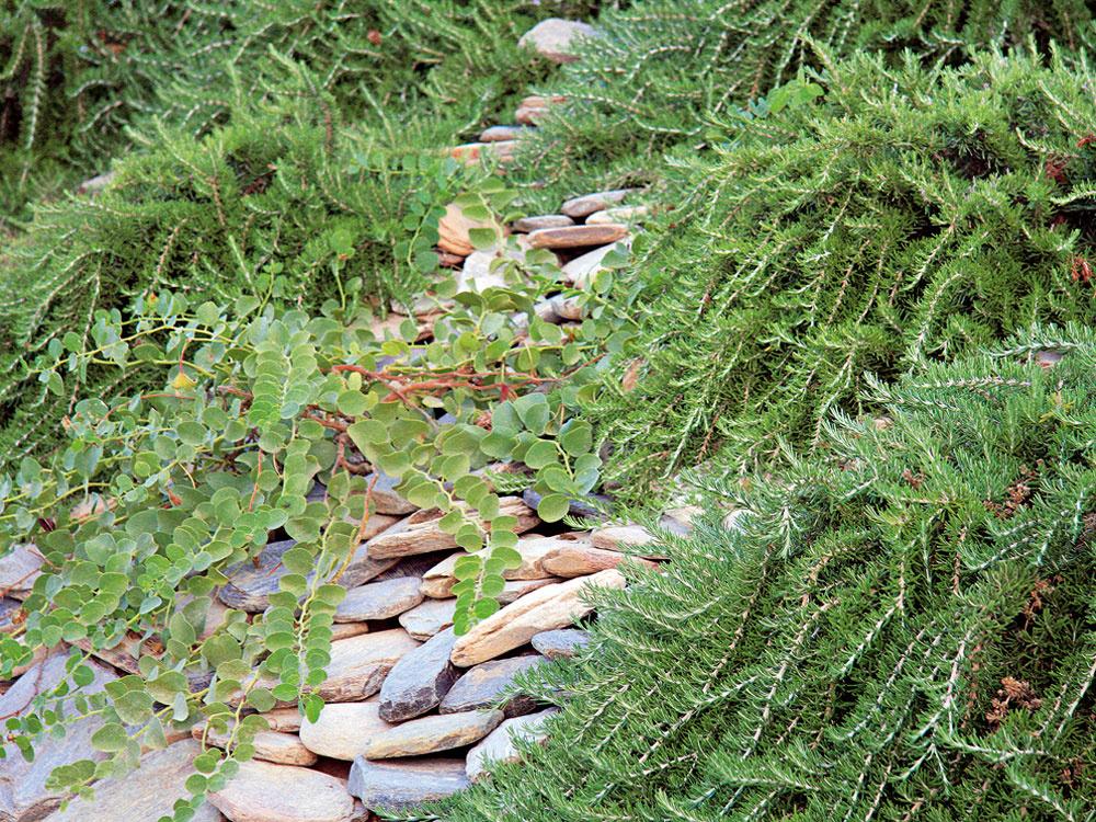 Augustové desatoro pre záhradkárov