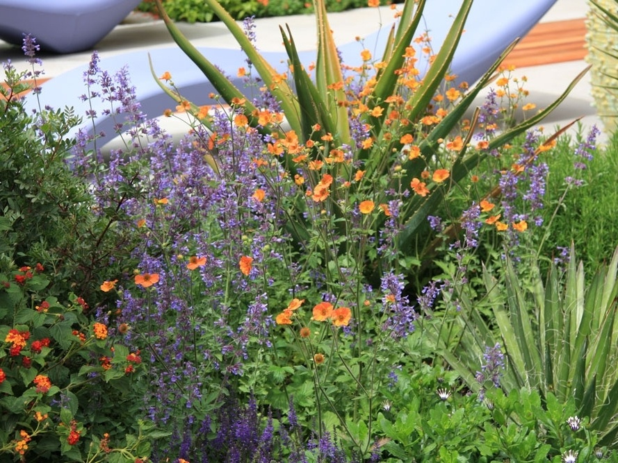 VIDEO Oživte svoju záhradu farbami!