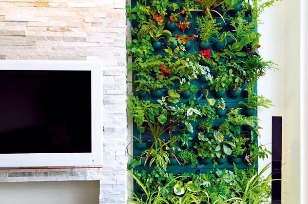 Izbové rastliny majú schopnosť čistiť vzduch od škodlivých látok apozitívne vplývajú aj na našu psychiku. Potrebujú však, napokon ako každý živý organizmus, pravidelnú starostlivosť. Jednou z rastlín kvitnúcich vo vegetačnej stene Bey aGabriela je kalanchoe scyklaménovo sfarbenými kvetmi, pôvabný je aj zelenec (Chlorophytum) snežnými bielymi kvietkami.