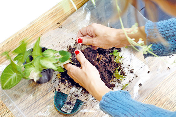 Rastliny sa sadia do substrátu vzásuvných kvetináčoch, pričom vodu zo zásobníka pomáha distribuovať netkaná textília.