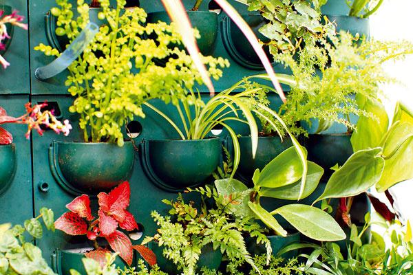 Zelenú stenu tvoria políčka, ktoré sa polievajú samostatne. Na kontrolu preliatia slúži priehľadná tuba, vktorej sa pri preliatí zadrží voda.