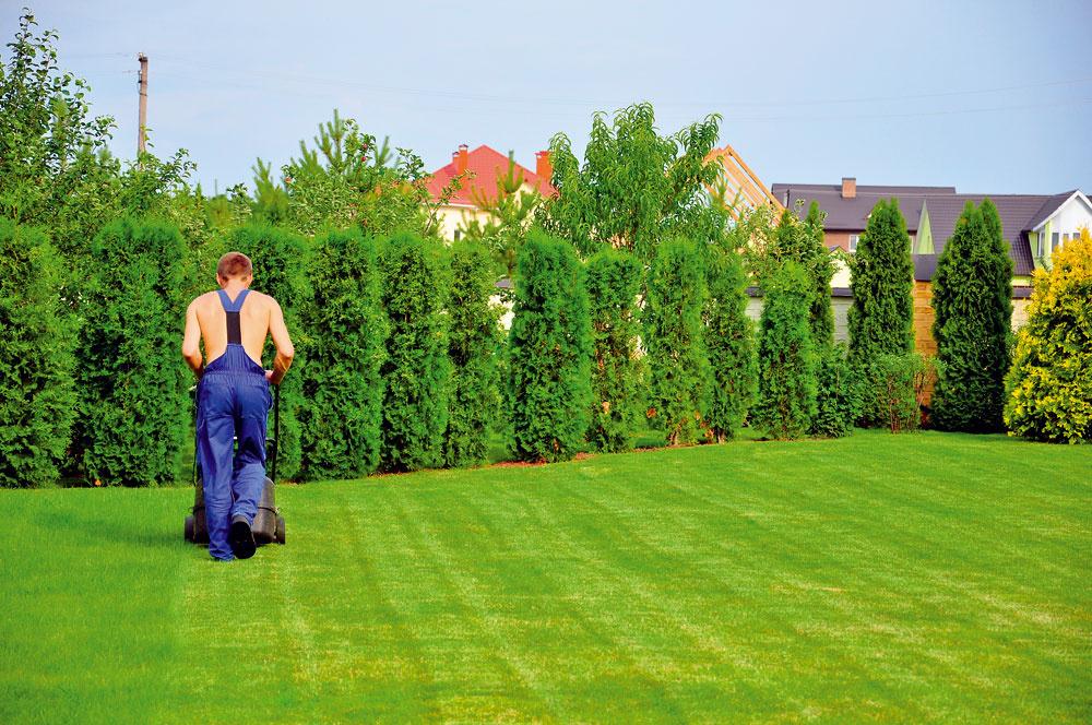 Tip do záhrady: Starostlivosť otrávnik  Na jeseň sa treba postarať aj otrávnik. Začiatkom septembra ho prihnojte hnojivom svyšším obsahom draslíka aželeza a sminimom fosforu adusíka – tak lepšie prežije zimu. Koncom septembra ho môžete poslednýkrát pokosiť na výšku štyri až šesť centimetrov. Vtomto mesiaci je príhodný čas aj na založenie nového trávnika, prípadne na regeneráciu toho starého, ktorý utrpel počas tohtoročného sucha (dosiať prázdne miesta na dobre prekyprenú aodburinenú pôdu). Do trávnika si môžete vysadiť aj hľuzy na jar kvitnúcich krokusov.