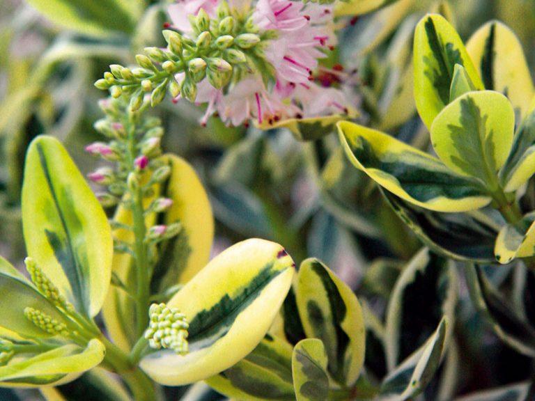 Septembrové desatoro pre záhradkárov