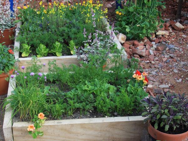 Povýšené záhony  Tam, kde to jednoducho nejde, napríklad nevyhovuje pôda, si zeleninu môžete vypestovať aj vo vegetačných nádobách alebo navyvýšených záhonoch, vktorých možno pripraviť substrát presne taký, aký rastlinám vyhovuje. Navyše, pri starostlivosti ovyvýšené záhony sa chrbtica toľko nenamáha, ich výšku si môžete prispôsobiť na mieru.