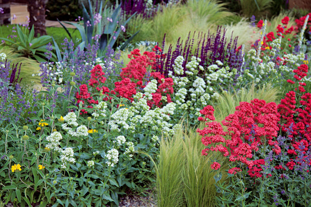 Dizajnér podriadil výber rastlín permanentnej farebnosti – vďaka tomu tu počas sezóny stále niečo kvitne. Väčšinou ide o dlhoveké, nenáročné trvalky obľubujúce sucho a slnko. Letničky, ktorých krása vynikne najmä vtedy, ak majú dostatok vlahy, by ste tu márne hľadali.