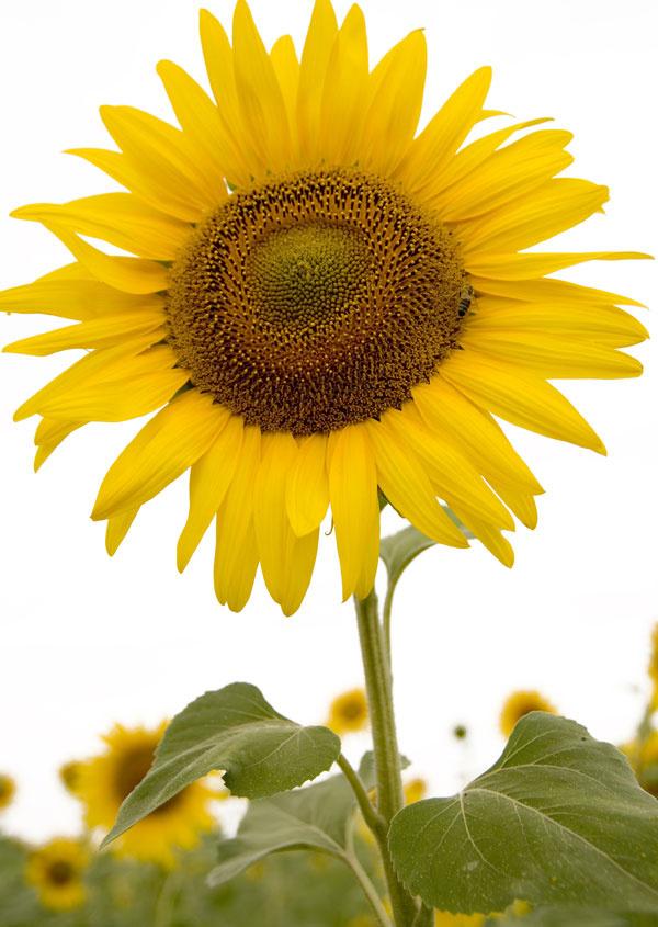 Vitamín plný slnka