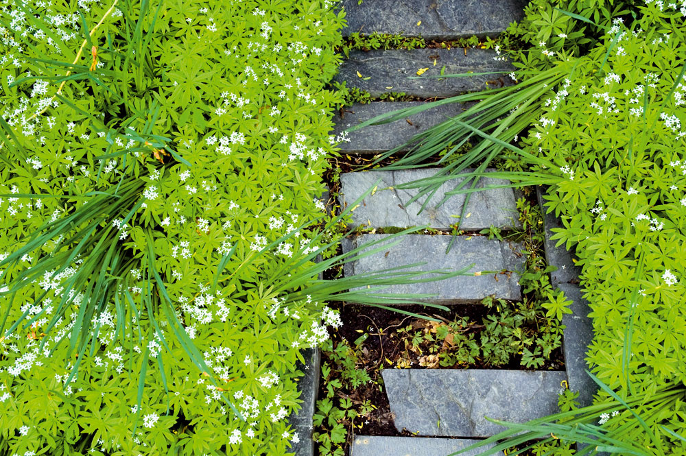 Takto dobre utajený chodníček je vhodný medzi pôdopokryvné rastliny alebo do kvetinových záhonov. Určite nad ním neuvažujte vbežnom trávniku – obojstranné obruby, nezapustené dostatočne hlboko do zeme, by vám len zbytočne komplikovali kosenie.
