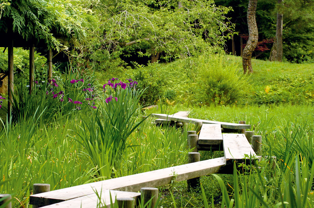Vyvýšené drevené lávky na pilótach sú vhodným riešením do prírodne ladenej záhrady sjazierkom. Drevo treba ošetriť tlakovou impregnáciou.