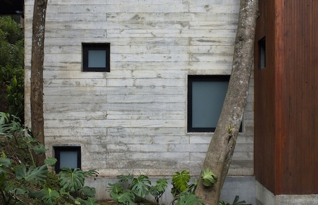 stromy v dome,