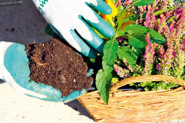 Nakoniec dosypte medzi vysadené rastliny do každého prázdneho miesta substrát. S košíkom jemne potraste. Substrát okolo rastlín jemne popritláčajte.