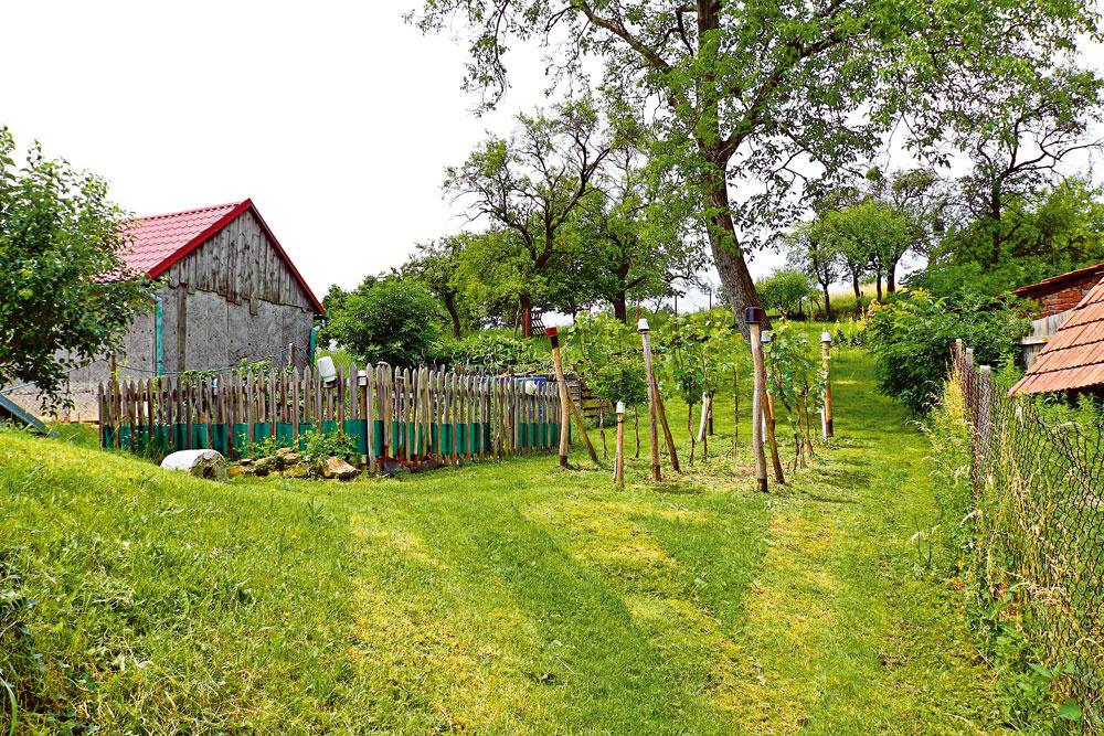 Horná časť záhrady je viac úžitková. Okrem zeleniny si tu miesto našiel aj vinohrad aovocné stromčeky.