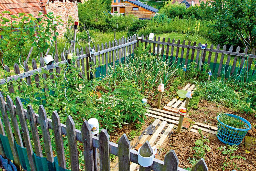 Pred psími nájazdmi chráni zeleninovú záhradku plot.