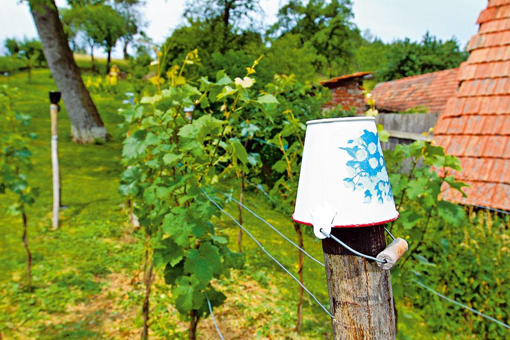 Ukážková prírodná záhrada na južnej Morave