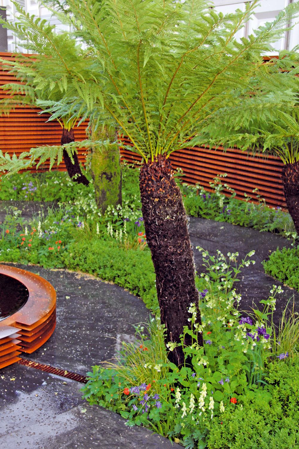 Palmy apaprade Vďaka klimatickým zmenám sa do záhrad dostáva množstvo takých rastlín, ktoré by sa vnich vminulosti dlho neohriali. Obľúbené je pestovanie paliem či stromovitých papradí, napríklad diksónií (Dicksonia antartica; na obrázku). Darí sa jej vpolotieni, vo vlhkej ahumusovitej pôde. Je síce mrazuvzdorná až do –12 °C, no predsa len potrebuje kvalitné zazimovanie.