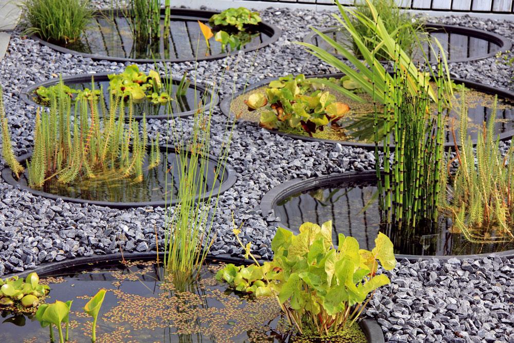 Jazierka vštrku Štrkové záhony sú momentálne veľkým hitom aj vďaka letným horúčavám, keď sa do popredia záujmu aj pestovania dostávajú suchomilné trvalky adreviny bez vysokých nárokov na vlahu. Ich efektnou inováciou sú minijazierka integrované do štrkom vysypanej plochy. Môžu konkurovať trsom farebných okrasných tráv či kvitnúcej levanduli. Treba len vybrať správne rastliny.