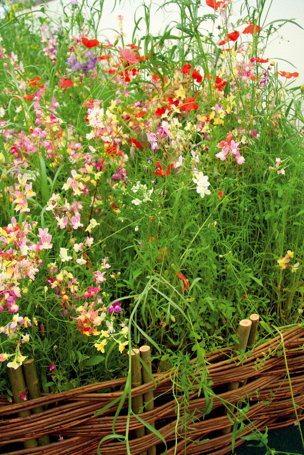 Ekologická divočinka Na všetkých podujatiach týkajúcich sa záhradného dizajnu sa to len tak hemží ekologickými konceptmi ariešeniami. Faktom je, že záhrada vprírodnom duchu je balzamom na dušu , najmä dušu mestského človeka, stresovaného každodenným zhonom arýchlym životným štýlom. Nehovoriac otom, že takáto záhrada je podstatne menej náročná na údržbu. To sa týka úžitkovej aj okrasnej časti.