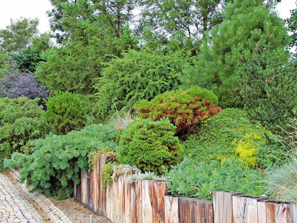 Dreviny Ak je svah prudší, lepšou voľbou ako trvalky, ktoré síce rýchlo rastú, sú lacnejšie amajú často ohromnú regeneračnú schopnosť, sú dreviny. Tie ho svojimi koreňmi dobre spevnia. Aby ste sa otakýto svah nemuseli sústavne starať, ako podklad pri výsadbe použite kvalitnú netkanú textíliu (alebo aj geotextíliu) – pôda sanebude splavovať, kým svah nebude dobre prekorenený, azároveň udrží dreviny na pôvodnom mieste.