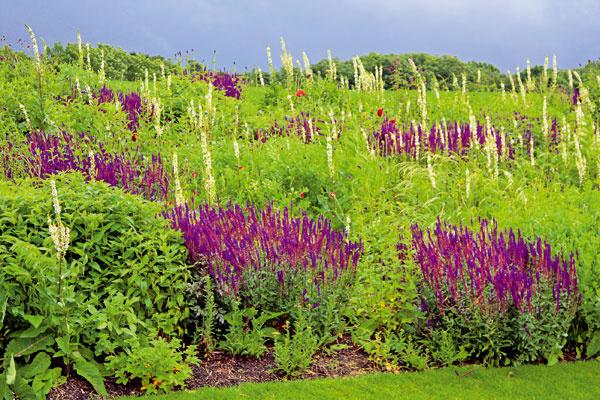 Kvetinové záhony Rýchlo rastúce, plazivé, kvitnúce aj nekvitnúce trvalky hravo zvládnu obrásť miernejší svah. Môžete si zvoliť čisto trvalkovú výsadbu alebo ich doplniť nižšími druhmi okrasných tráv acibuľovinami kvitnúcimi na jar či jeseň.