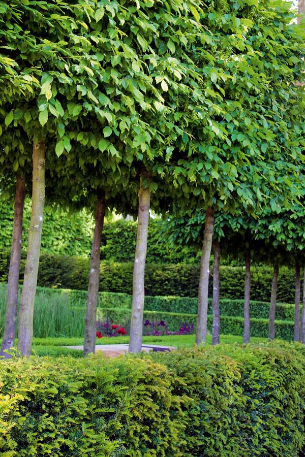 TIP do záhrady: Špalierové dreviny Aktuálnym trendom vzáhradách sú okrasné stromy so zapestovanou plochou korunkou, ktoré čiastočne pripomínajú palmety, teda tvary, vktorých sa pestujú ovocné dreviny. Sú dominantným deliacim prvkom, hodia sa kmoderným aj pôvodným domom amožno ich spájať aj sklasickými živými plotmi. Nemajú extrémne nároky na priestor, sú však drahšie anáročnejšie na údržbu. Dôležitý je najmä systematický rez aprihnojovanie podporujúce tvorbu nových výhonkov. Zdrevín sú vhodné lipy, hraby, buky, javory aokrasné jablone.
