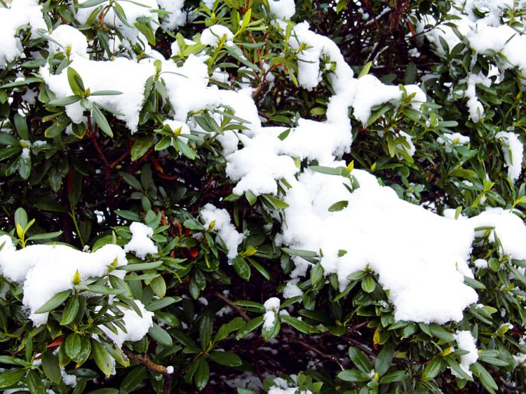 Februárové tipy do záhrady