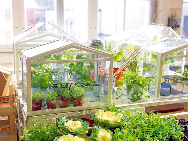 Miniskleník SOCKER, oceľový rám, tvrdené sklo, rozmery 45 × 22 × 35 cm. Cena 12,99 €. Predáva IKEA.