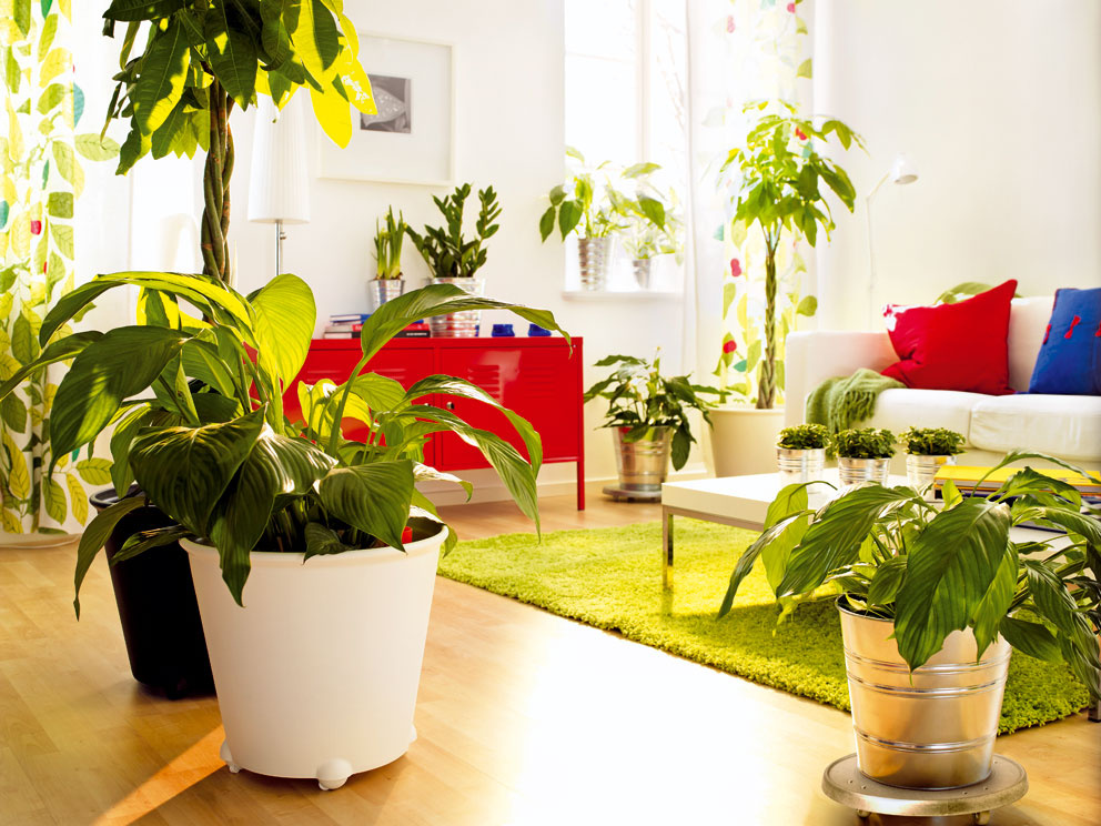 Aké izbové rastliny sú vhodné do vašeho bytu?