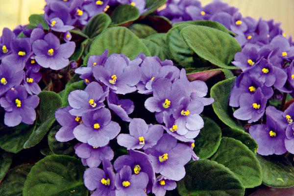 Aj v zime sa môžete v interiéri tešiť z kvitnúcich kvetov. Ktoré sú tie najkrajšie?