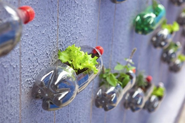 Pri vytváraní vertikálnej PET záhrady však nezabúdajte, že každá rastlina má špecifické potreby. Bezhlavé kreatívne úlety amatérskych záhradníkov vyzerajú dobre :), no zbytočné obmedzenia neprospievajú nikomu – či žije v črepníku, PET fľaši alebo vo vile.
