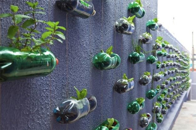 Zábavychtiví kreatívci sa jednoducho pohrajú s výberom rastliniek, prípadne fľaše zavesia do rôznych kompozícií. Keď sa kvety rozvijú, môže byť z toho aj malý záhradný artefakt. V počiatočných fázach môžu farebný efekt vytvárať dokonca aj vrchnáčiky. Tí praktickejší možno práve objavili nový spôsob pestovania priesad.
