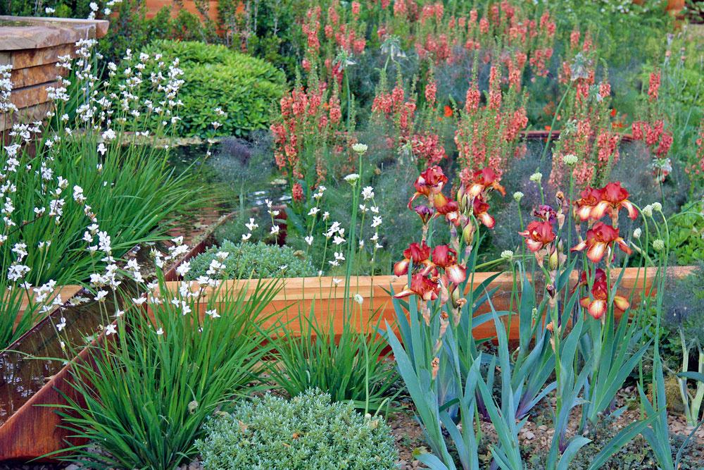 Koncom jari azačiatkom leta zaplavia záhradu kvety kosatcov adivozela.