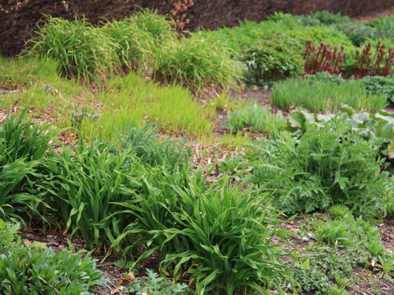 Niekoľko (nielen) marcových tipov do záhrady