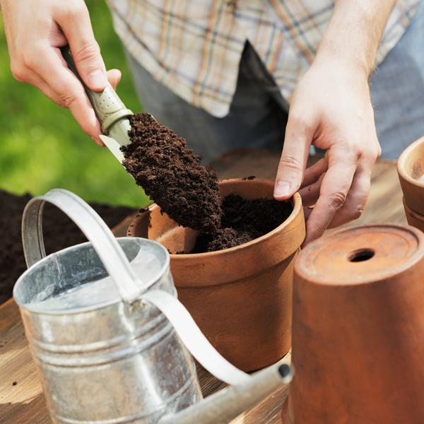 Vhodný čas na presádzanie. Izbové rastliny presádzajte do kyprého substrátu raz za 3až 4 roky, mladšie rastliny každoročne. Signálom na presadenie je, keď korene vyrastajú zodtokových otvorov, prípadne sa vytláčajú na povrch. Pri presádzaní rastlinu dôkladne prezrite a odstráňte suché, zvädnuté apoškodené listy astonky. Nový črepník musí byť vpriemere aspoň o3 cm väčší ako pôvodný. Väčším rastlinám črepník netreba meniť, postačí vymeniť vrchnú vrstvu substrátu. Pozor, niektoré rastliny vyžadujú špeciálny substrát!