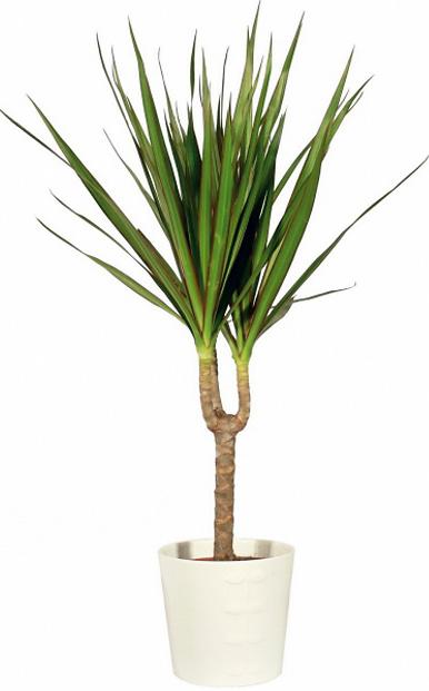 Rastlina je vždy vhodný doplnok. A dracéna sa do spálne priam pýta pre svoju schopnosť čistiť vzduch.