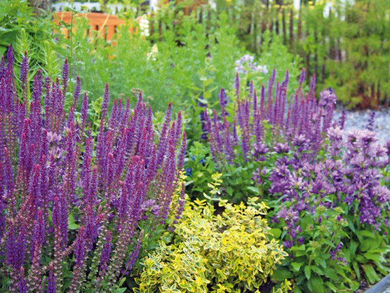 7 šikovných tipov ako rýchlo vybudovať záhradu